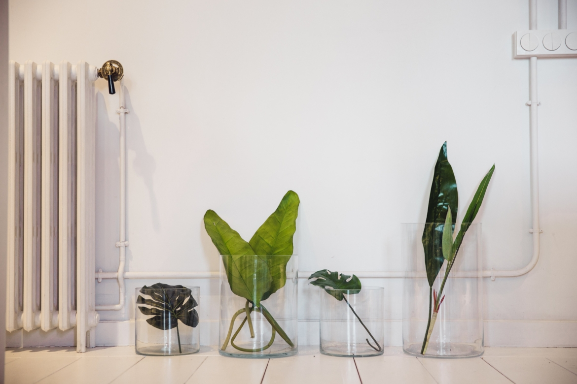 different-plant-leaves-sit-in-glass-jars.jpg